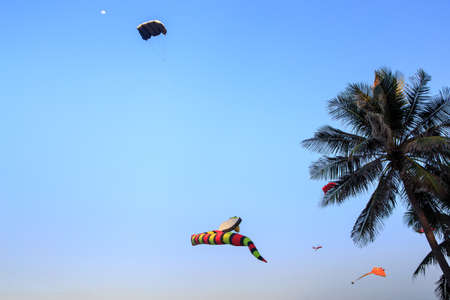 str: colorful kites of different shape in azure sky against large palm in Vietnam