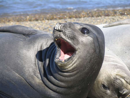 Family of sea-dogs on Atlantic shore Stock Photo - 787017