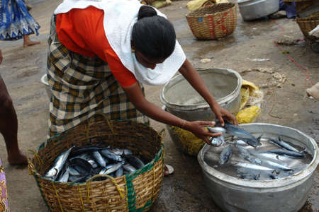fish selling: Indian woman is selling fresh fish