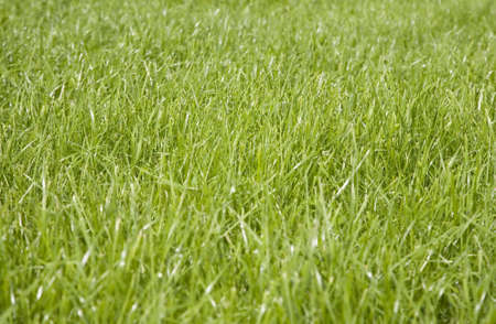 Meadow covered with a lush green grass Stock Photo - 3475819