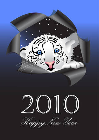 2010 New Years symbol white tiger   Vector