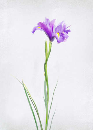 painted image: Watercolored iris