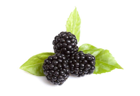Close-up view of blackberries on a white background  photo