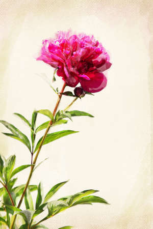 Illustration of watercolor red peony on a vintage background Stock Photo