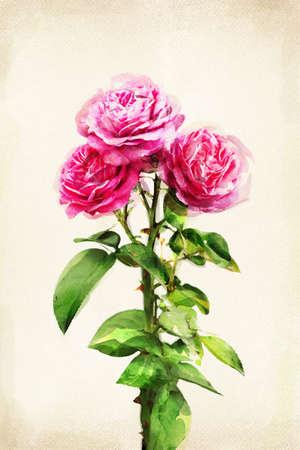 Illustrazione di acquerello rosa su uno sfondo d'epoca Archivio Fotografico - 10359475
