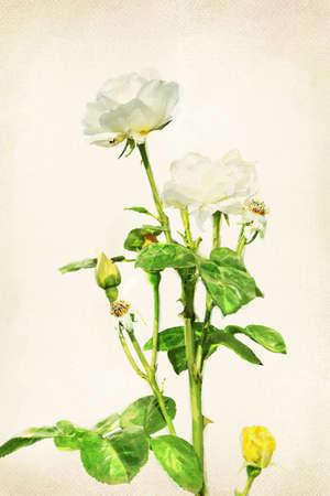 Illustration of watercolor rose on a vintage background illustration