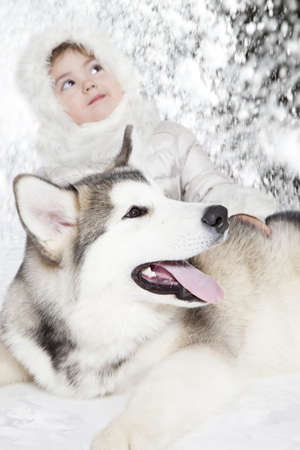 five month old: Five month old malamute puppy with a girl. Focus on a dog Stock Photo