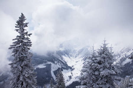 snowcapped: Foggy forest and mountains in winter. Bad Gastein, Austrian Alps