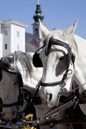 horse and carriage: Carriage horses waiting for its next passenger. Salzburg, Austria  Stock Photo
