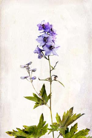 Illustration of watercolor delphinium on a vintage background illustration