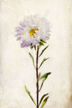 Illustration of watercolor lilac aster on a vintage background illustration