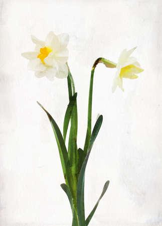 ビンテージ背景に水彩水仙のイラスト
