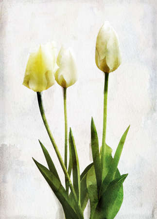 Illustration of watercolor yellow tulip on a vintage background illustration