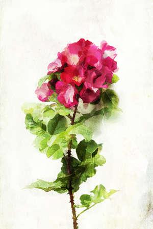 Illustration of watercolor rose  illustration