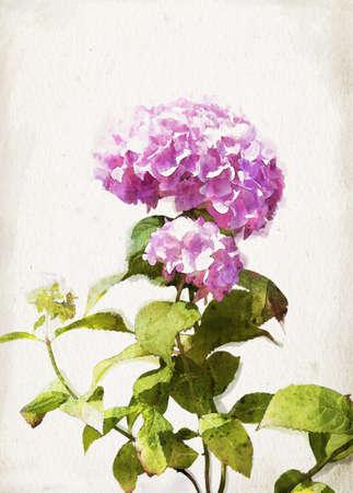 ビンテージ背景にピンクのアジサイを水彩のイラスト 写真素材