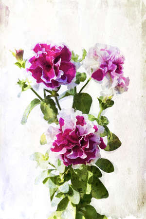 Illustration of watercolor crimson petunia on a vintage background