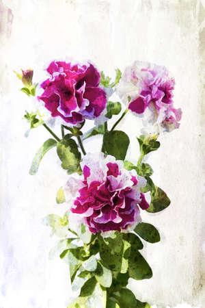 Illustration of watercolor crimson petunia on a vintage background