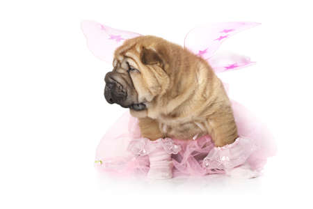 Chinese sharpei Puppy dog dressed up like a fairy Stock Photo - 16931036