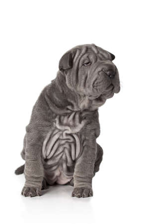 Portrait of sharpei puppy dog against white background Stock Photo - 17170109
