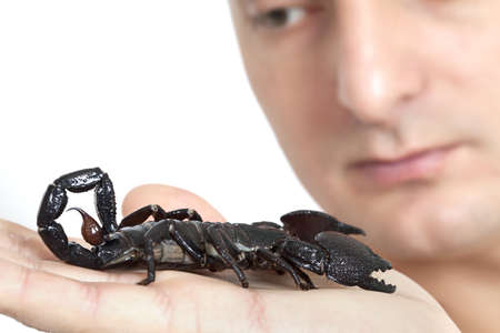 Young man Looking at black scorpion on his palm Stock Photo - 18204145
