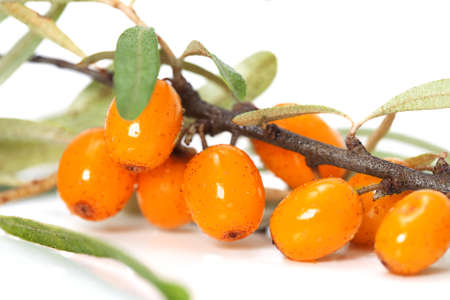 buckthorn: Closeup of branch from sea-buckthorn berries over white Stock Photo