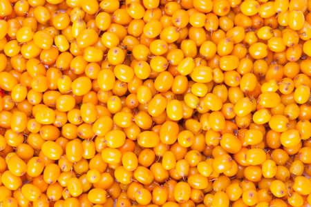 argousier: Plein cadre de fond de mer orange-nerprun Banque d'images