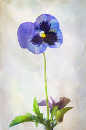 nature one painted: Illustration of watercolor purple pansy on a vintage background  Stock Photo