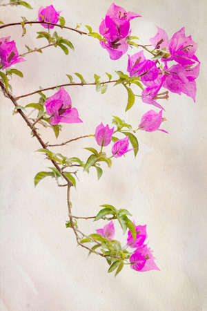 bougainvillea: Exotic pink Bougainvilleas against a vintage background