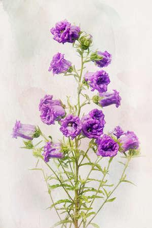 campanula: Illustration of watercolor Lilac campanula on a vintage background