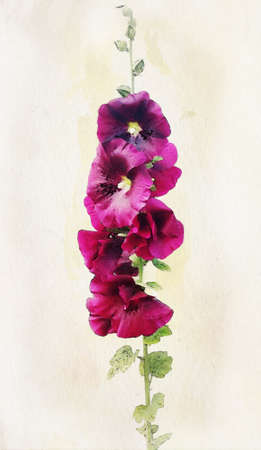 nature one painted: Illustration of watercolor vinous malva on a vintage background