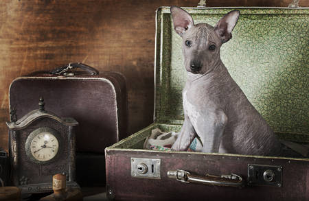 emulation: Portrait of a puppy . Intentional 1900s style post processing emulation.