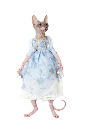 Sphinx: Humorous image of Sphinx cat dressed as a doll in front of white background