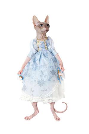 esfinge: Imagen humorística de esfinge gato vestido como una muñeca delante de fondo blanco