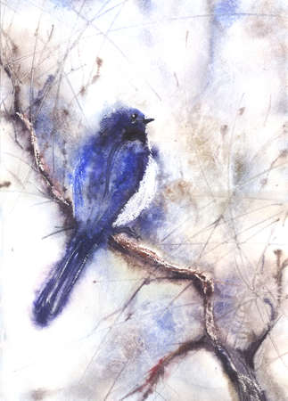 birds in tree: Water color illustration of a bird sitting on a branch. Wet-in-Wet watercolor technique Stock Photo