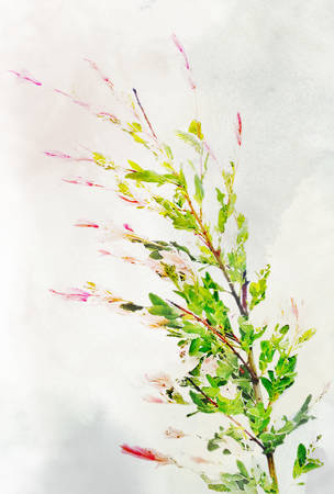variegated: Illustration of watercolor variegated willow on a vintage background