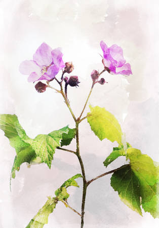 fragility: Illustration of watercolor dog-rose Rosa canina on a vintage background Stock Photo