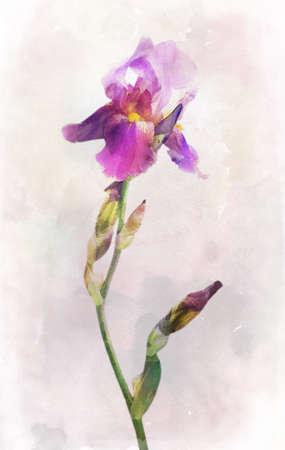 Illustration de l'aquarelle fleur d'iris sur un fond millésime