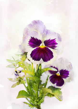 flower painting: Illustration of watercolor pansy flower Viola tricolor on a vintage background