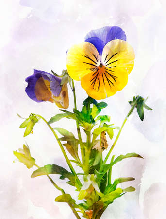 pansy: Illustration of watercolor pansy flower Viola tricolor. Artistic watercolor painting style with texture Stock Photo