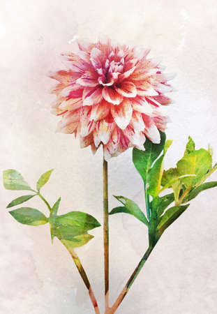 painting style: Illustration of dahlia flower. Artistic watercolor painting style with texture