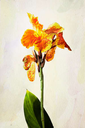 flower painting: Illustration of watercolor Iris flower. Artistic watercolor painting style with texture