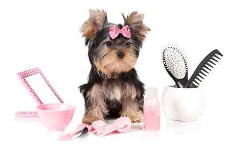 Yorkshire terrier met grooming producten geïsoleerd op een witte achtergrond