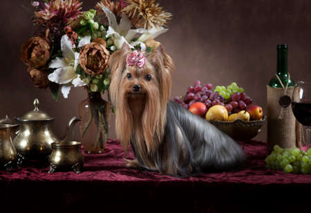 classical style: Yorkshire terrier dog with fruit, flowers and wine in classical Dutch style