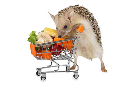 organisms: Little African hedgehog carries a cart full of products isolated on a white background