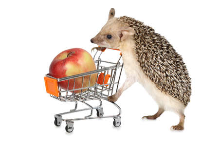 Little African hedgehog carries a cart with red apple isolated on a white Stock Photo