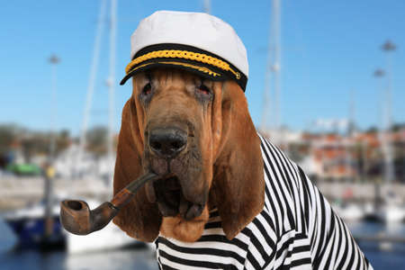 Purebred Bloodhound dog dressed in a marine uniform with a pipe in his mouth on the background of sea yachts