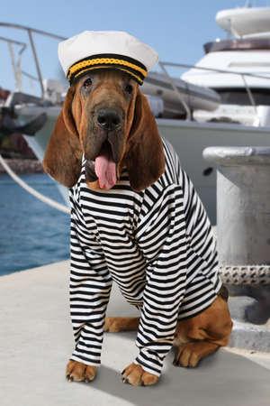 Chien de sablier vêtu d'un uniforme marin avec une langue traînée sur le fond du yacht de mer Banque d'images - 77857783