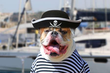 Retrato de American Bulldog vestido con ropa de pirata con la lengua colgando en el fondo del yate de mar