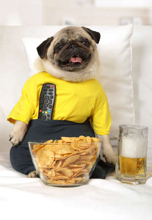 Funny photo of a pug dog sitting on the couch with remote control, glass of beer and chips while watching TV