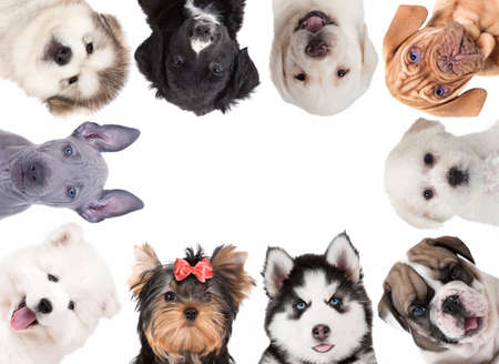 Collage of cute baby dogs isolated on white background